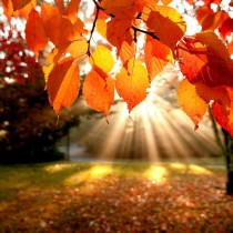 526687__shining-fall_p